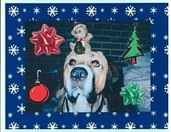 Close up - A brown with black white Spanish Mastiff is sitting on a carpet next to a bed, it is looking forward and it has a teddy bear on its head. Overlayed on the image is a red ribbon, green ribbon, a drawn christmas tree and a drawn red ball.