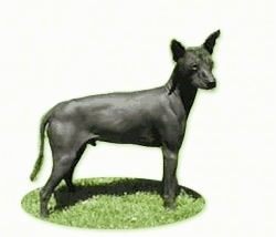 The right side of a black Xoloitzcuintli dog standing in grass. the background of the image has been composited away.
