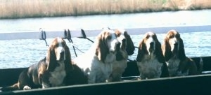 Five Basset Hound Dogs sitting in a boat on the water