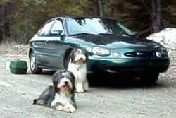 Jessy and Rowan the Bearded Collies sitting in front of a green car
