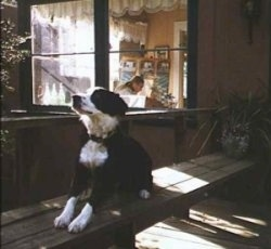 Patty the Border Collie laying on a bench outside in front of a window