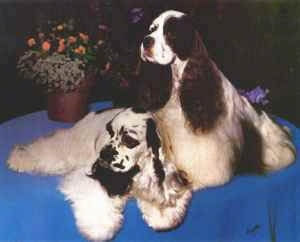 Two American Cocker Spaniels sitting on table next to a potted plant on top of a blue cloth.