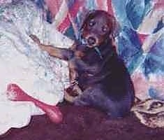 Twister the Doberman Pinscher puppy is laying against a bed and with colorful blankets and a red bone in front of it.