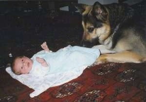 A black and tan German Shepherd is laying at the feet of a baby who is on the floor on top of a blanket.