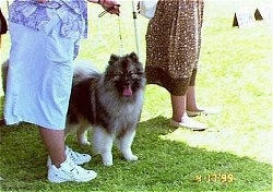 A Keeshond is standing in grass in-between a lady dressed in baby-blue who is holding its leash and a lady in a brown dress at a dog show.