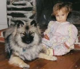 A Keeshond puppy is laying in front of a little girl in front of a fireplace