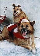 A standing and a laying tan with white mixed breed dog. The front most dog is wearing a santas jacket and a Santa hat. There is another dog behind wearing reindeer horns.