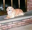 A Golden Cocker Retriever is laying on a bannister in front of a fireplace