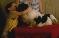 Left Profile - A white with black Pekingese is sitting on a table. There is a boy reaching up and hugging the dog. Behind them is a person in a striped shirt.