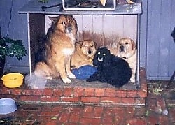 Four dogs are sitting and laying in a doghouse