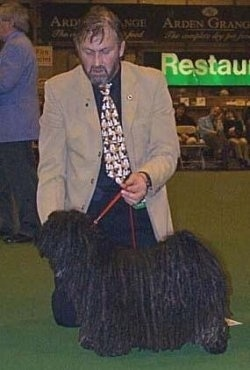 Left Profile - A dreaded black Puli is being posed across a green surface at a dog show. There is a man on his knees behind the dog.
