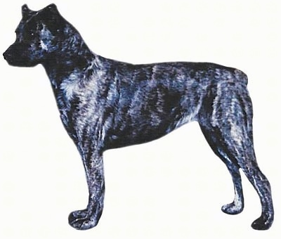 Azores Cattle Dog Puppies For Sale