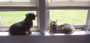Andy the cat and Halee the dog sitting on a window sill and looking out of the window