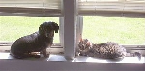 Andy the cat and Halee the dog sitting on a window sill and looking at the camera holder