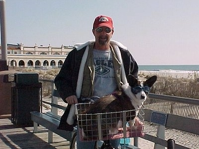 Bailey the Cardigan Welsh Corgi Puppy is sitting in a cart on a bicycle. There is a person on the bike. They are at the Boardwalk at Ocean City, New Jersey