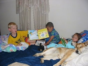 There are Three kids sitting on a bed with Lucy Lu the Carolina Dog. One Boy is showing an open book towards the camera and the little girl is reading a book. Lucy Lu is sleeping.