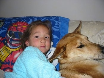 Lucy Lu the Carolina Dog is laying on a bed cuddled up to a little girl