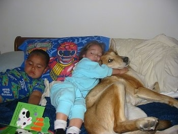Lucy Lu the Carolina Dog is sharing a bed with a little boy and a little girl. The girl is cuddling with Lucy Lu