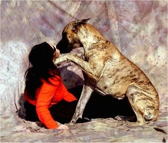 A lady in a red shirt is sitting in front of a brindle Great Dane. The Great Dane has a paw up at the ladies face and the lady is kissing the Great Dane