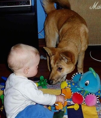 Lindy the Dingo is kneeling down and looking at a baby sitting on a blanket playing with Finding Nemo toys.