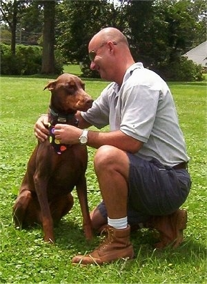 Boomer the brown and tan Doberman Pinscher is sitting in a field next to a bald man wearing sunglasses named Joe, who is smiling at the dog. The dog is wearing a black bandana with polka dots all over it.