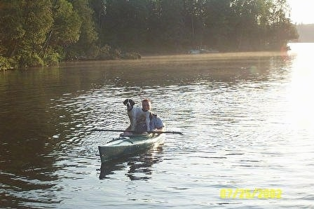 Remington Steel the English Springer Spaniel is riding on a kayak with a man through a body of water