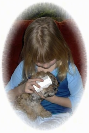 A girl is grooming a puppy with a small white flea comb
