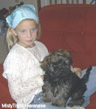 A black with tan Havanese puppy is sitting on the lap of a blonde haired girl who is wearing a light blue head piece on a red couch.