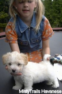 A white with tan Havanese puppy is standing on a trampoline with a blonde haired girl behind it posing the puppy in a stack.