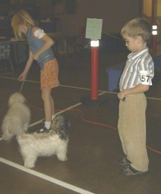 A blonde haired girl is reaching her hand down in front of a white fluffy dog. There is a boy looking down at a white with grey and black dog in front of him.