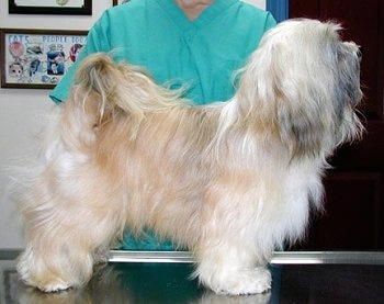 Checking Structure In Longhaired Breeds