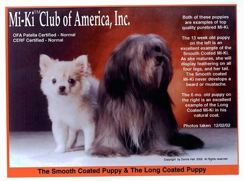 A Mi-Ki Club of America, Inc. cover with two dogs on the front, a short coat white dog and a long coat black, brown and tan dog.
