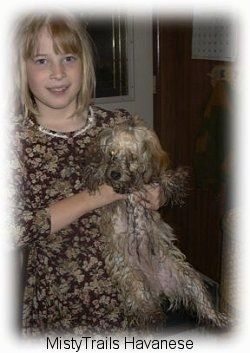 A blonde-haired girl is holding up a small dirty dog by the front under its legs.