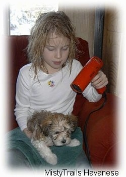 A girl in a white shirt is blow drying a wet dog with a red blow dryer that is laying in her lap.