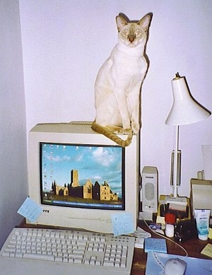 Sid the Siamese Cat is sitting on a CRT monitor next to a lamp at a desk and looking directly at the camera holder