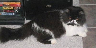 Oreo the black and white bicolor Persian cat is laying on a rug with an entertainment system on it that has VHS Tapes on it