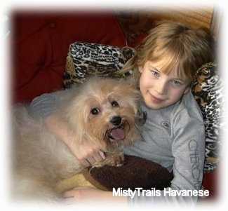 A girl in a grey shirt is laying against a pillow and on top of her is a tan Havanese. Both the dog and the girl are smiling.