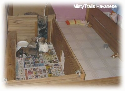 Little puppies eating food out of a bowl in the back of a wooden whelping box. The dam is behind them watching.