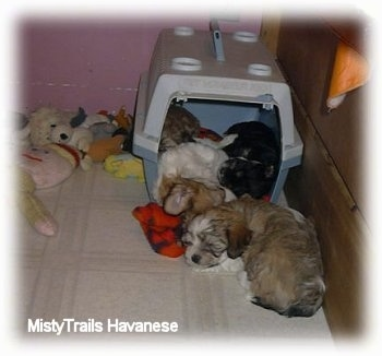 A couple puppies sleeping around a crate in the back of the whelping box. There are plush toys in the corner outside of the crate.