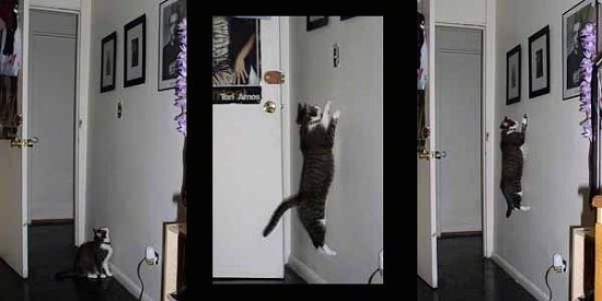 A Series of Photos showing a Mia the Cat jumping up a wall to hit a lightswitch