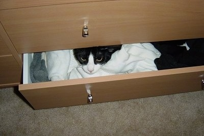 Henry the black and white cat is laying in the bottom drawer of a dresser and peeking out