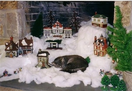 Shaggy the cat is sleeping on a model Christmas town
