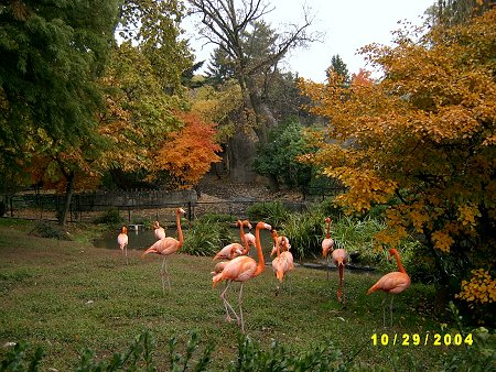 A flock of flamingos standing on grass