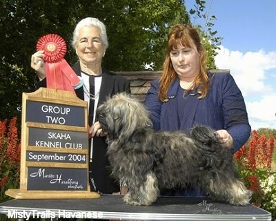 A black and tan Havanese is standing on a table outside. There is a lady behind it posing the Havanese in a stack. There is another lady next to them holding up a red ribbon