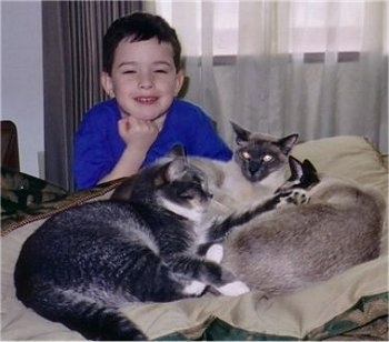 Three cats are laying on a bed and there is a young boy behind them. The boy is looking forward and smiling.
