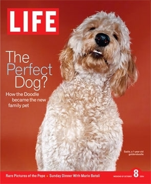 A Goldendoodle is on the Cover of a 2004 issue of life magazine