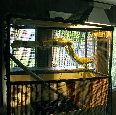 A browm iguana is standing on the second level of its cage under a heat lamp.
