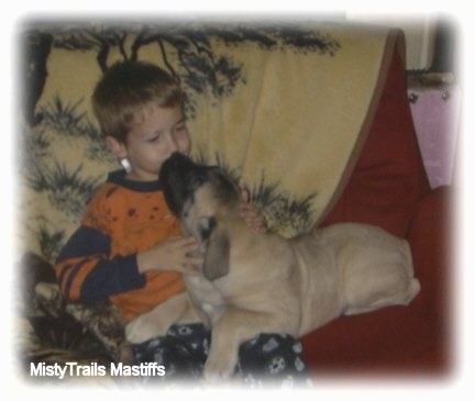 A tan with black English Mastiff puppy is laying on a red couch and licking the face of a boy sitting next to it. There is a tan throw blanket with a tree print on it behind them.