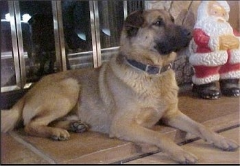 Mongrel = Mixed Breed Dogs – Mutt or Mutts - Cross Breed