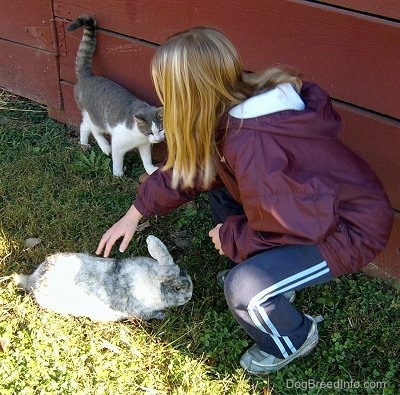 A blonde haired girl is squatting down to pet at a black with white rabbit. Behind her is a cat rubbing its back along a red barn wall and it is leering at the rabbit.